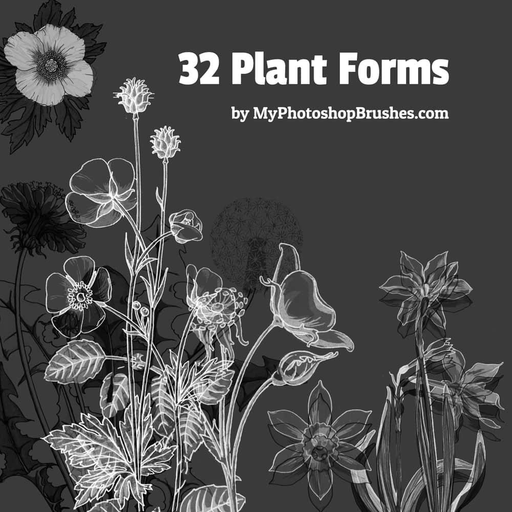 32种植物野草野花造型PS剪贴画笔刷素材 野草笔刷 野花笔刷 植物花纹笔刷 手绘花草笔刷  flowers brushes