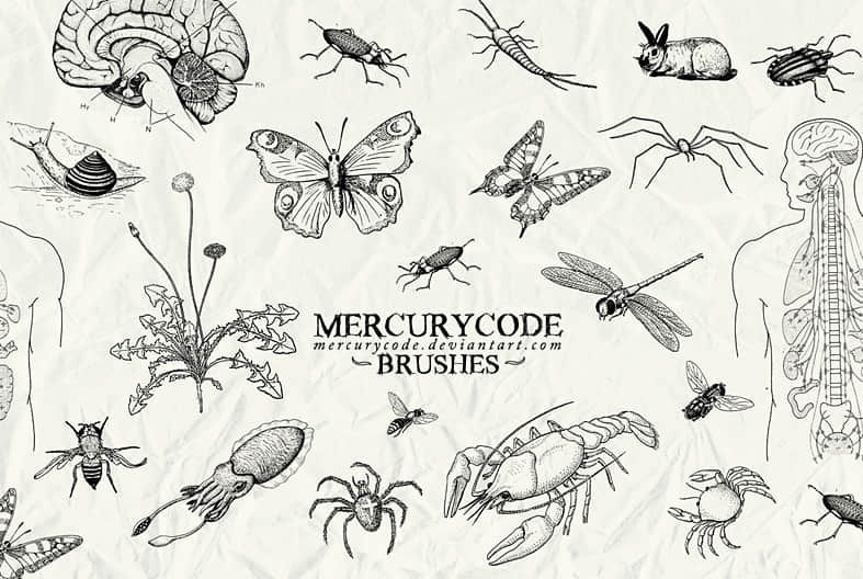 brushset_03__biology_by_mercurycode-d65gr8m