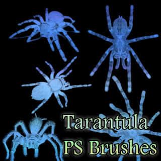 恐怖蜘蛛造型Photoshop昆虫笔刷 蜘蛛笔刷  insects brushes