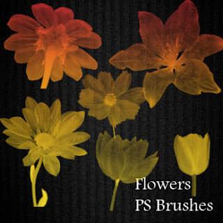 x光透视图鲜花花朵图案Photoshop笔刷素材 鲜花笔刷 花朵笔刷  plants brushes