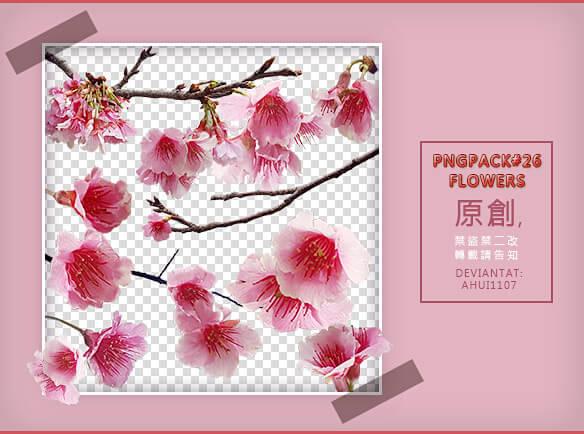 漂亮的梅花花朵、鲜花图案Photoshop鲜花笔刷 鲜花笔刷 花朵笔刷 梅花笔刷  flowers brushes plants brushes