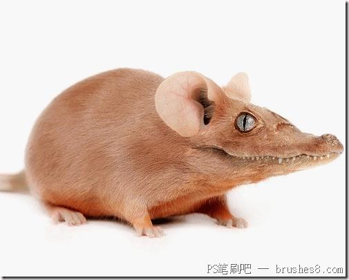 创造怪异的PS动物照片处理