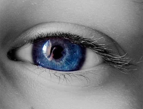 微观世界的精彩摄影 - 让你能静下心来