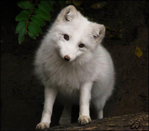 毛茸茸的动物照片摄影