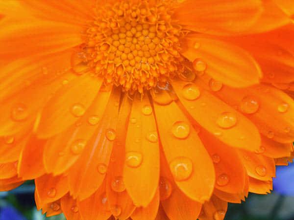 35张雨中的浪漫摄影欣赏