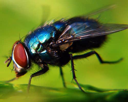 70张有趣的昆虫摄影照片 昆虫摄影 摄影照片 微观摄影  photography