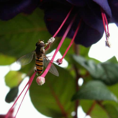 70张有趣的昆虫摄影照片