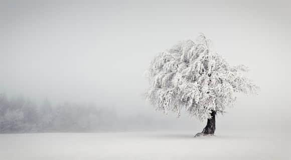 55张雾中摄影照片