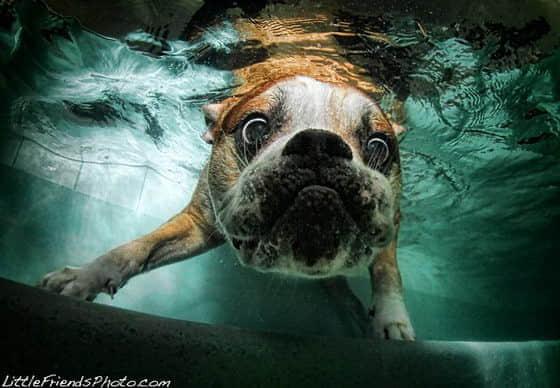 8张奇妙的水下狗狗摄影照片