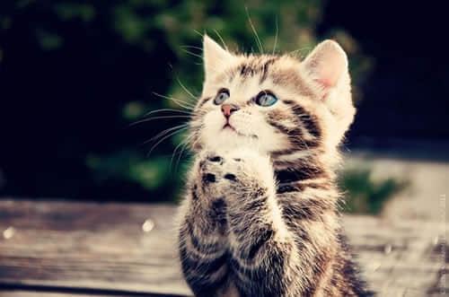 萌死你的猫咪摄影照片