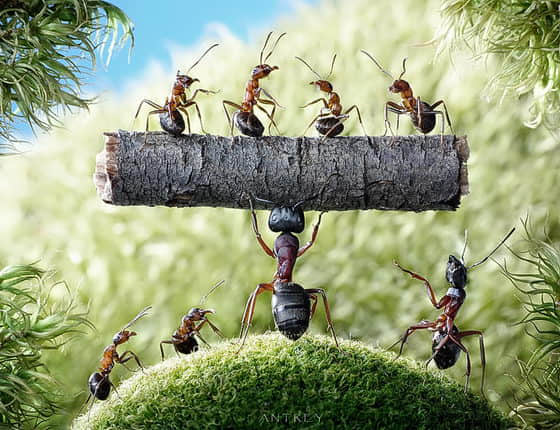18张蚂蚁微距摄影艺术