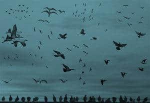 大雁海鸥鸟类笔刷