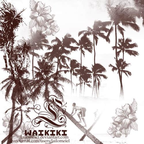 夏威夷风情椰子树笔刷 椰子树笔刷 树木笔刷  plants brushes