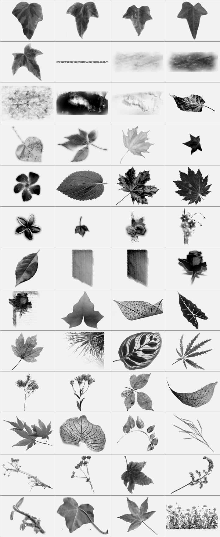 多种类型的植物树叶笔刷6个打包下载