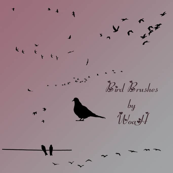 鸟类剪影笔刷