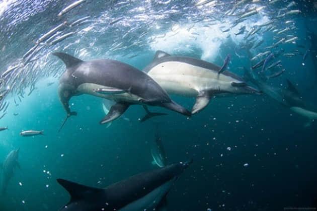 30张海中的精彩摄影照片