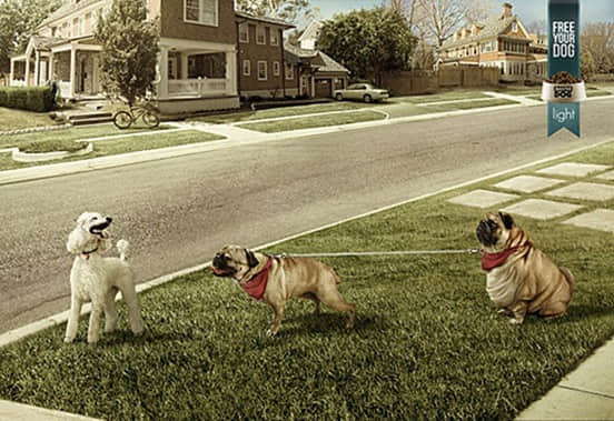 40张独特的动物平面广告创意设计