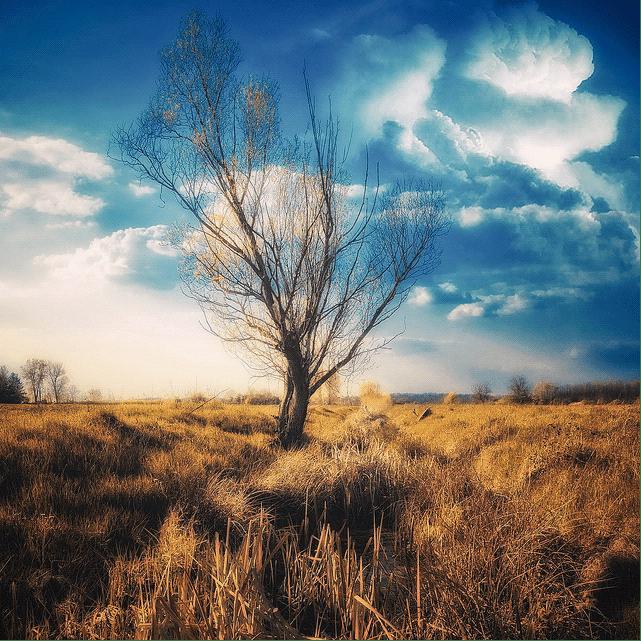 25张超美的自然摄影美图欣赏