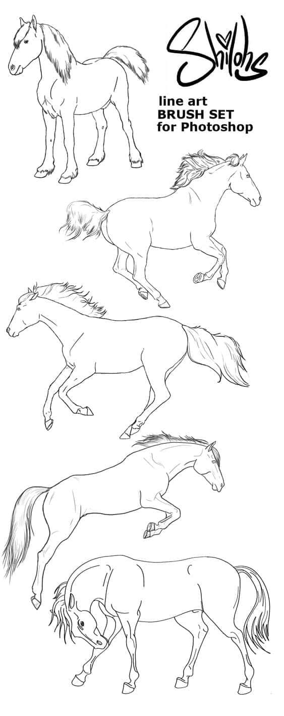 线条型马匹笔刷