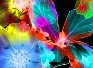 七彩光影花瓣笔刷 花瓣笔刷 光影笔刷  flowers brushes