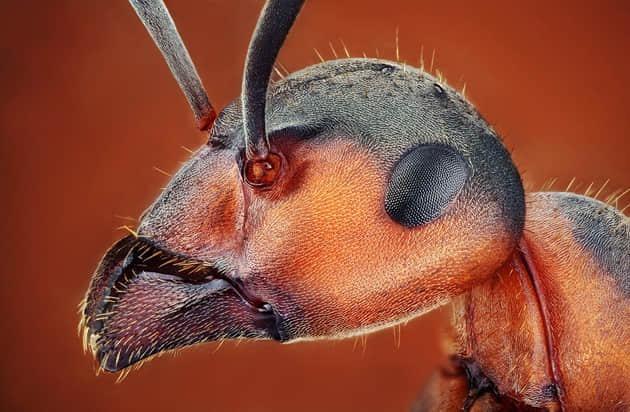 73张高清微距昆虫摄影照片——摄影爱好者不可错过的摄影精品展览