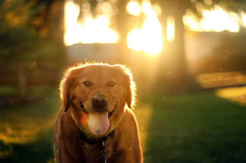 20张可爱萌态十足的狗狗摄影照片