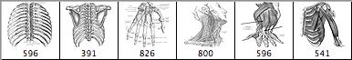 人体肌肉组织笔刷