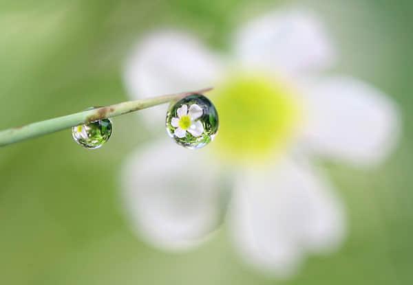 30张水滴微距摄影照片