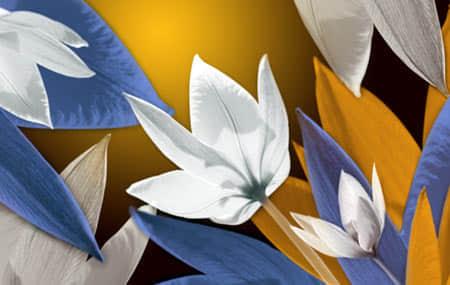 漂亮的花朵笔刷免费下载