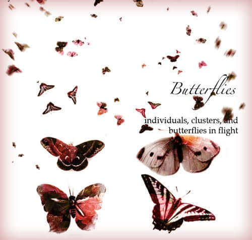 高分辨率蝴蝶图案笔刷