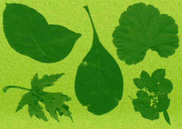 10种高分辨率的绿叶笔刷