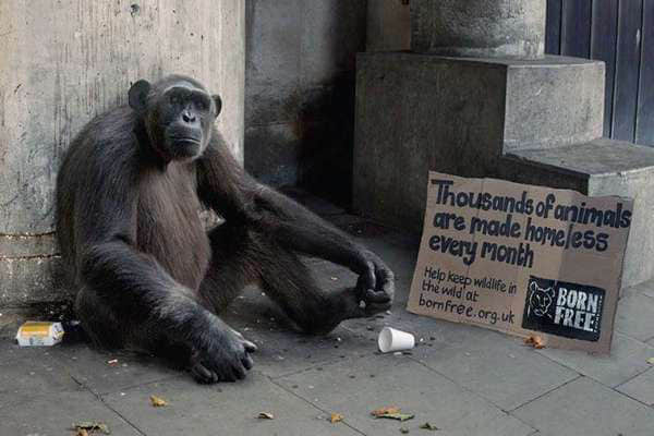 14-homeless-wild-animal-ad