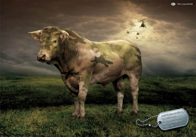15-pfizer-animal-health-cow-ad.preview