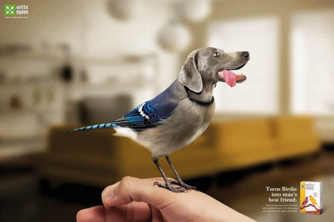 24-turns-birds-into-mans-best-friend-ad.preview