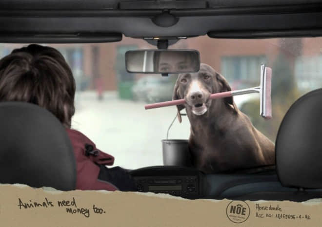 Animal-need-money-to-go-carwash.preview