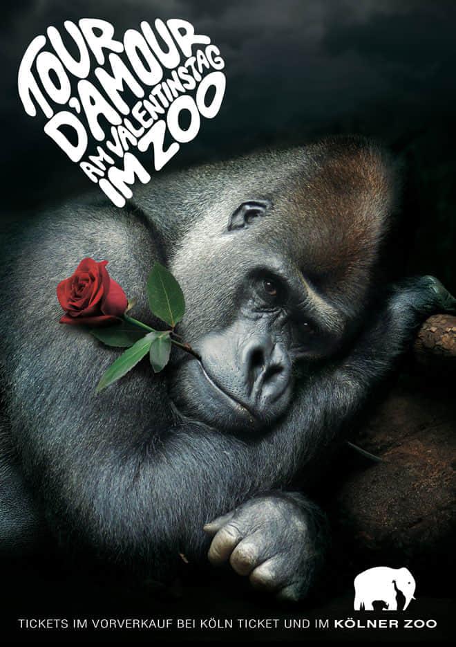 Valentines-Day-at-Kolner-Zoo