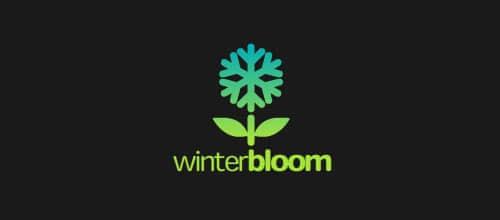 12-twelve-WinterBloom