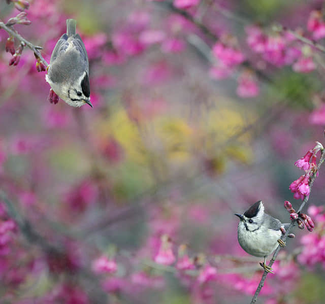 27张春天的小鸟摄影照片