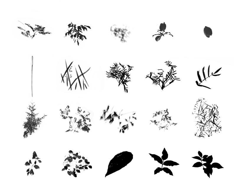 22种树叶笔刷