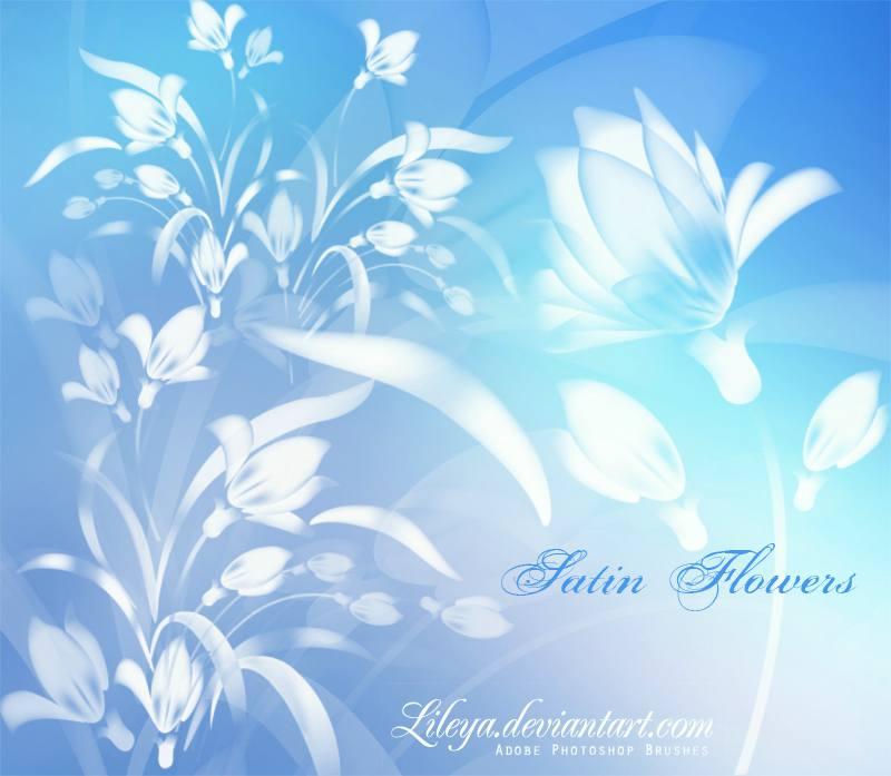 漂亮的兰花鲜花笔刷