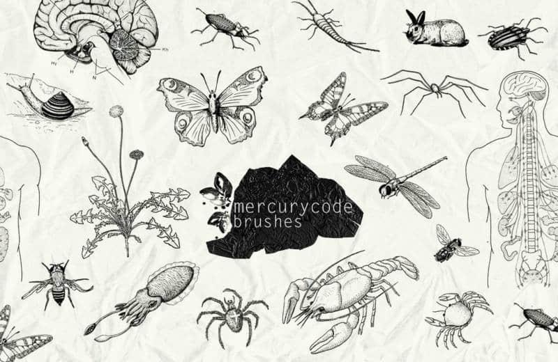 手绘卡通效果的人体、昆虫PS笔刷