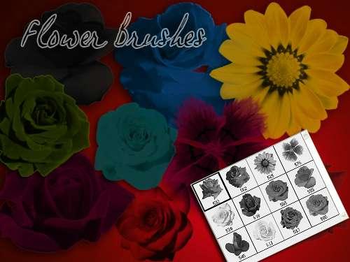 漂亮的真实玫瑰花、太阳花、月季PS笔刷
