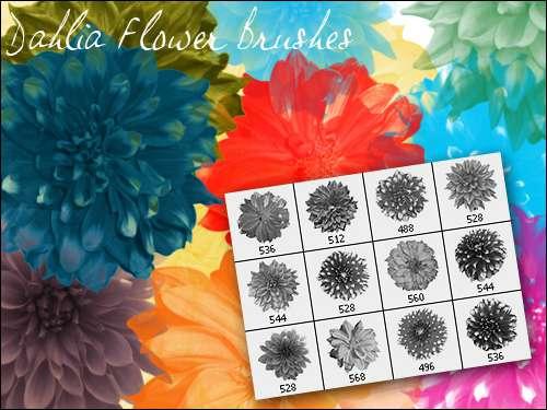 漂亮的真实花朵PS笔刷下载