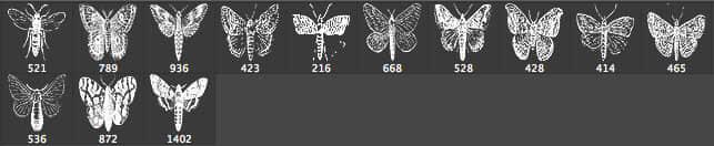 飞蛾昆虫PS笔刷下载