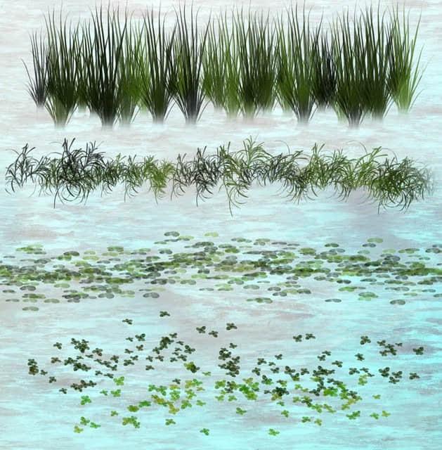 浮游水草装饰系列PS笔刷