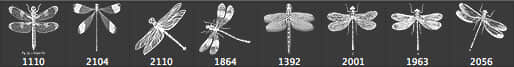 古典式蜻蜓昆虫PS笔刷