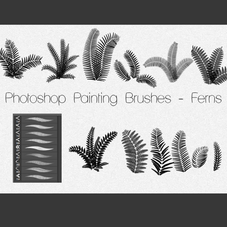 Photoshop蕨类植物素材笔刷下载 蕨类植物笔刷  plants brushes