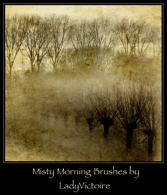 雾中的森林与树林背景PS笔刷下载