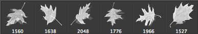 CG效果梦幻枫叶、树叶、枯叶PS素材笔刷 落叶笔刷 梧桐叶笔刷 树叶笔刷 枯叶笔刷 枫叶笔刷  plants brushes