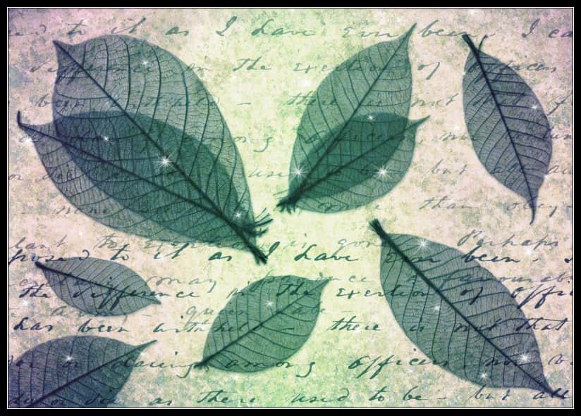 梦幻的绿叶纹理、半透明树叶photoshop笔刷素材下载 绿叶纹理笔刷 树叶笔刷  plants brushes